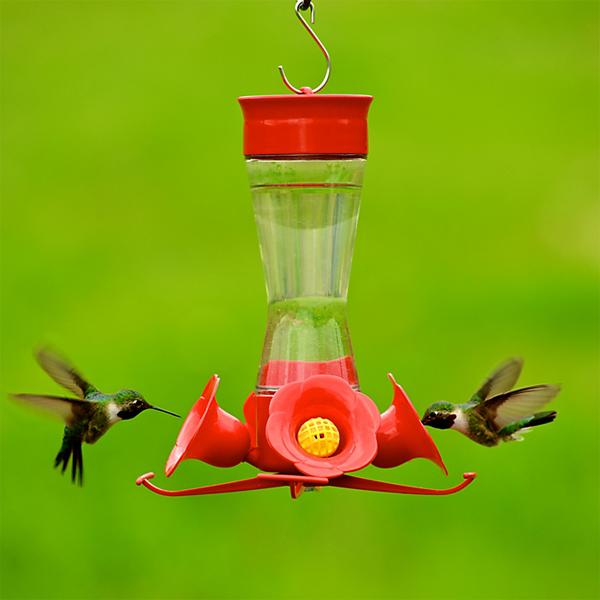 Cómo atraer a los colibríes y las mariposas a su jardín | MNN - Red Madre Naturaleza